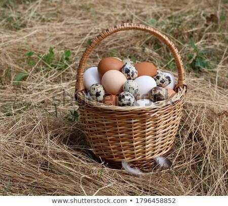 Jaj pełny wiklina koszyka odizolowany biały Zdjęcia stock © orensila