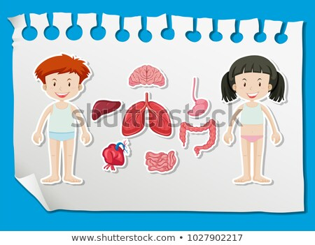 Boy and girl with different organs on chart Stock photo © bluering