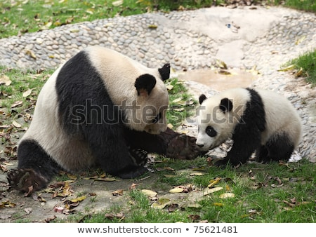 Cute mother and baby panda Stock photo © tigatelu