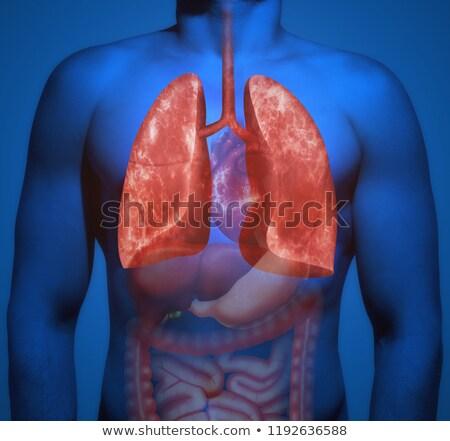 Stock fotó: Emberi · anatómia · tüdő · probléma · illusztráció · szív · háttér