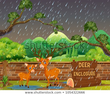 Two deers in the zoo on rainny day Stock photo © colematt