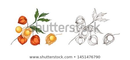 yalıtılmış · beyaz · arka · plan · turuncu · kış · renk - stok fotoğraf © grafvision
