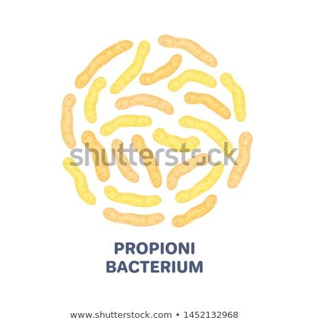 vector probiotics in circular shape propionibacterium microbiome medicine or dietary supplement stock photo © user_10144511