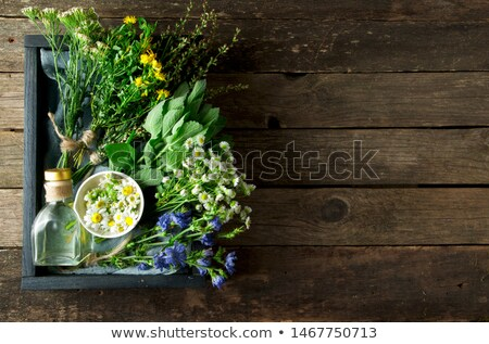 Yarrow and St. John's Wort Stock photo © joker