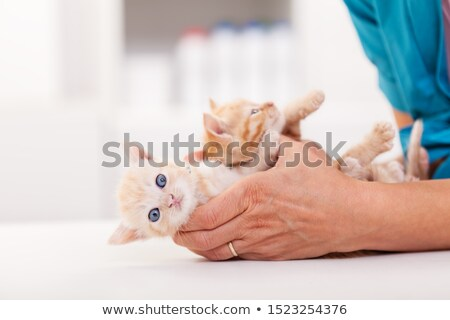 Vétérinaire santé professionnels mains deux Photo stock © ilona75