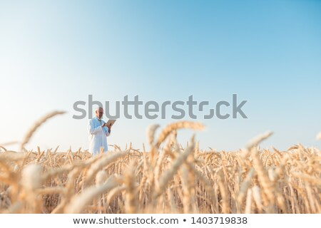 Agriculture scientist doing research in grain test field tracking data Stock photo © Kzenon
