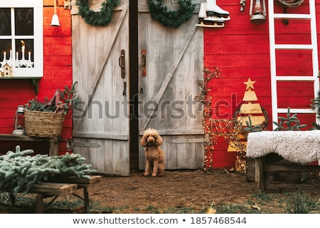 Christmas cosy sitting in front of decorated Christmas tree Stock photo © lovleah