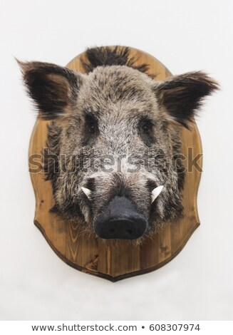Wild boar. Stuffed animal Stock photo © nomadsoul1