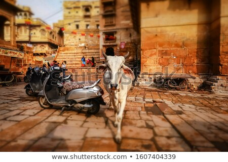 Tilt shift lens - Cow on street in India. Constitution of India  Stock photo © cookelma