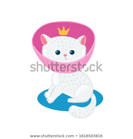 Pet insurance. Little cute white kitten in pink veterinary collar. Damage to cat. Caring for animal Stock photo © user_10144511