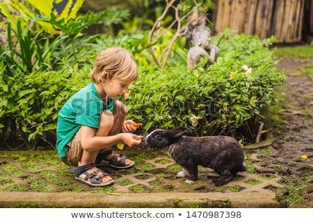 The boy feeds the rabbit. Cosmetics test on rabbit animal. Cruelty free and stop animal abuse concep Stock photo © galitskaya