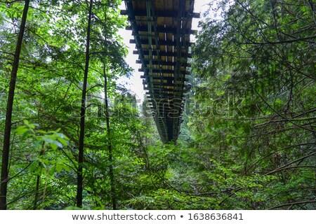 Stockfoto: Boom · brug · eenzaam · water · natuur