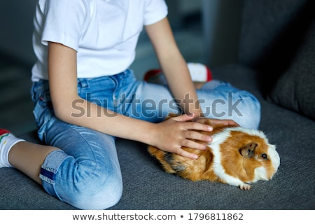 Little girl in mask playing with red guinea pig, cavy at home at sofa while in quarantine. Stock photo © Illia