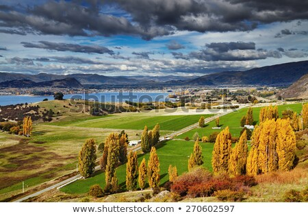 New Zealand nature farmland green valley landscape with trees. Travel destination. Stock photo © Maridav