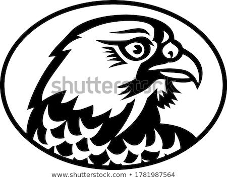 Head of Peregrine Falcon or the Duck Hawk Side Mascot Black and White Stock photo © patrimonio