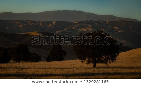 Sunset over hilly California meadow stock photo © mtilghma