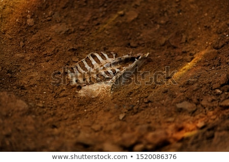 esqueleto · cinza · adulto · 3d · render · medicina · cor - foto stock © njaj