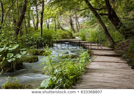 Ahşap orman tropikal ağaç çim doğa Stok fotoğraf © saje