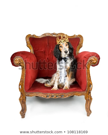 pampered royal dog stock photo © shevs