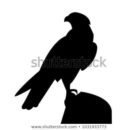 sziluett · sólyom · háttér · madár · fekete · szabadság - stock fotó © perysty