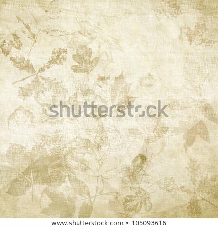 Crumpled Maple Leaf stock photo © ca2hill
