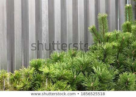 Green fence fragment from a  ornamental shrub Stock photo © vavlt