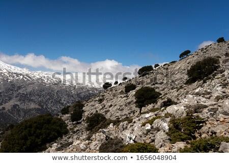Beautiful scape panorama of the hill, Crete, Greece Stock photo © dashapetrenko