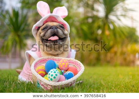 easter dog stock photo © willeecole