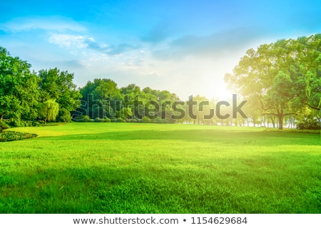 Stock photo: pastoral field