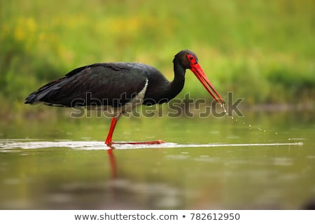 stork stock photos stock images and vectors stockfresh