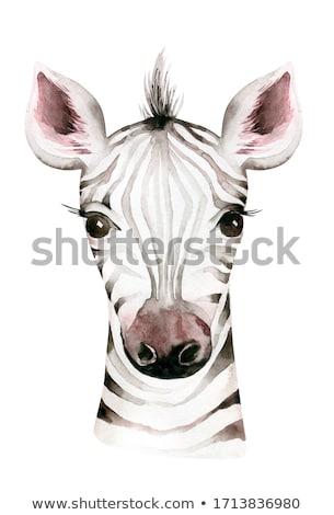 Safari animal  stock photo © adrenalina