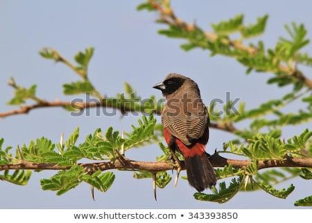 Vad szabad madarak Afrika természet háttér Stock fotó © Livingwild