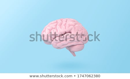 3D cerveau 3d illustration blanche médicaux science Photo stock © tiero
