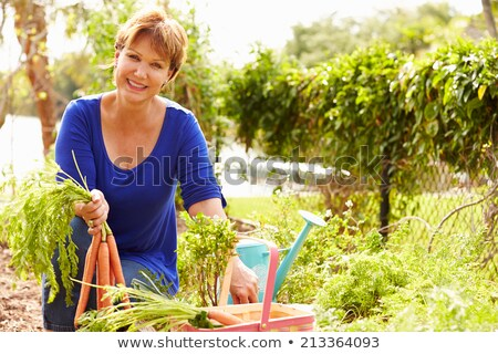Woman picking carrots on allotment Stock photo © monkey_business