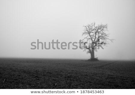 черно белые широкий области портрет небе трава Сток-фото © stryjek