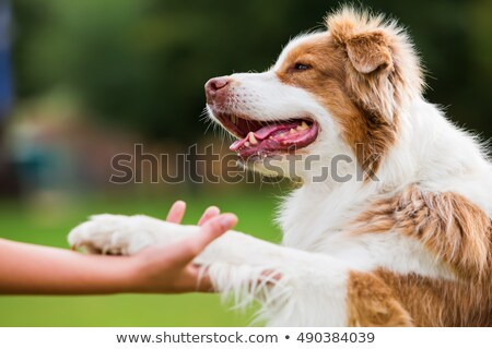 pacsi · mancs · kutya · kéz · tulajdonos · férfi - stock fotó © willeecole