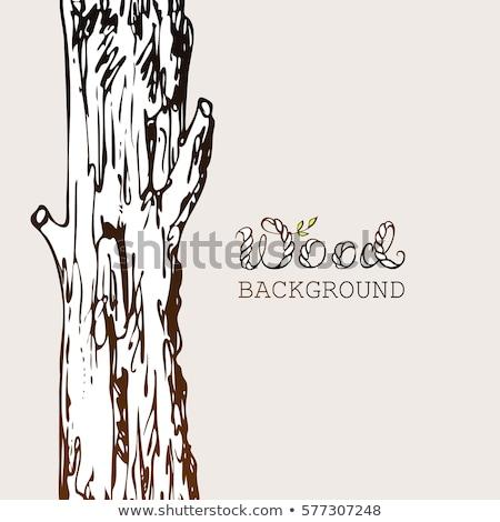 voetganger · pad · najaar · bos · kleurrijk · boom - stockfoto © dermot68