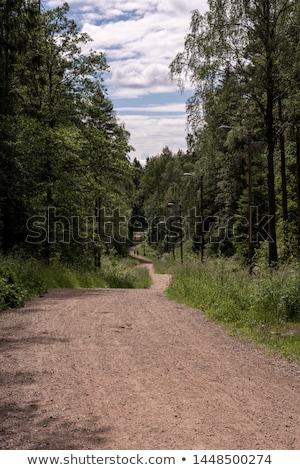 estrada · rural · backlight · floresta · pôr · do · sol · paisagem · beleza - foto stock © olandsfokus