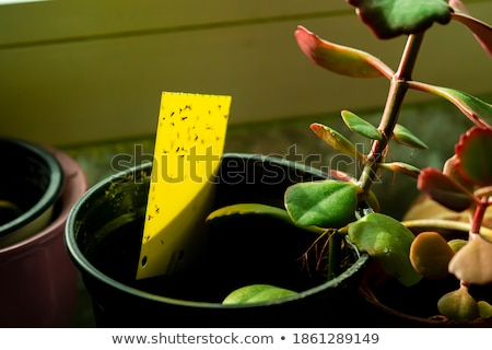 Sticky yellow stock photo © markbeckwith
