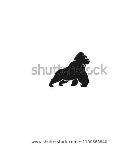 Goryl głowie czarno białe rysunek ilustracja wektora Zdjęcia stock © orensila