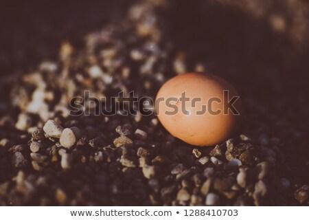 rachado · terreno · la · deserto · pormenor · textura - foto stock © entazist