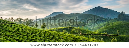 tea · farm · ködös · reggel · természet · tájkép - stock fotó © cookelma