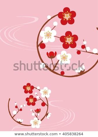 UME Japanese plum-blossom Stock photo © yoshiyayo