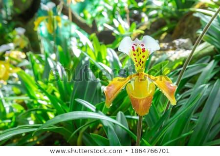 tavasz · levél · háttér · ajándék · trópusi · rózsaszín - stock fotó © slunicko