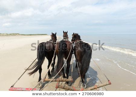 horses with tilt car at the coast stock photo © ivonnewierink