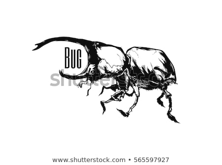 rhinoceros beetle vector tattoo or for t shirts stock photo © hermione