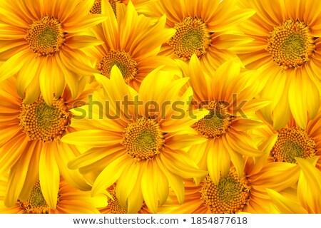 zonnebloem · plant · vector · icon · stijl - stockfoto © beholdereye