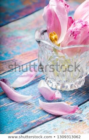 Rózsaszín tulipán makró közelkép stúdió természetes fény Stock fotó © pictureguy