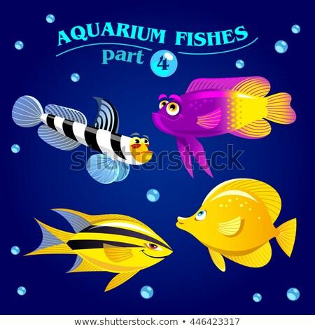 Vector set of marine aquarium fishes. Part 4. Stock photo © natalya_zimina