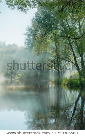Clareira luz grama sol verde folhas Foto stock © njaj